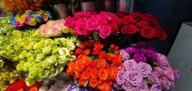 nhung loai hoa dep